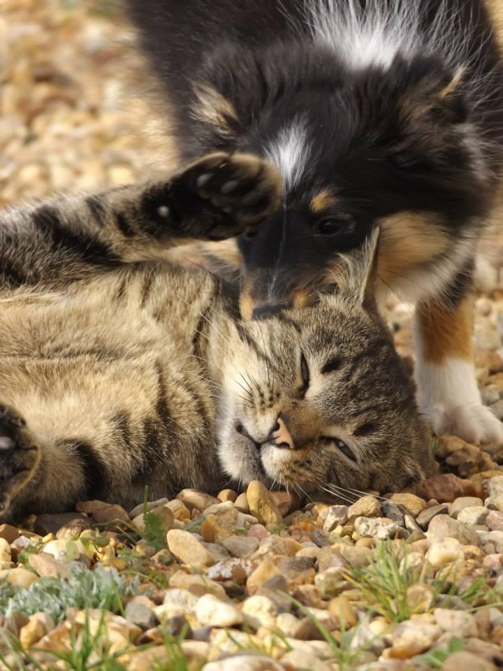 Photographie d'animaux - conseils pour devenir un pro ! - Page 2 12344611