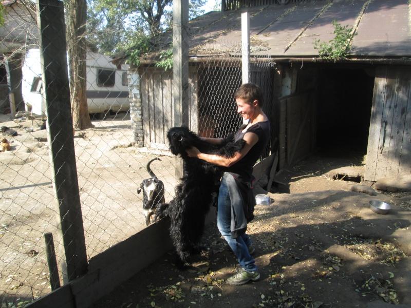 FLOKI, M-X, né 2011, env. 25 kg (Etela) - Pris en charge SPA SAVERNE - Page 2 Img_0616