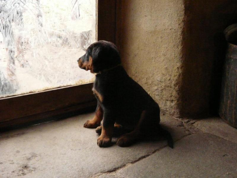 """Evolution """"physique"""" de vos chiens - Page 4 P1730411"""