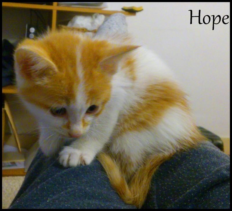 HELIOS (hope) Dsc_0414