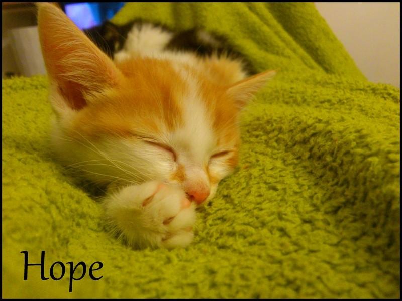 HELIOS (hope) Dsc_0419