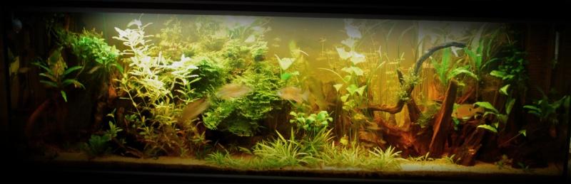 On ne s'ennuis pas en aquariophilie/ aquarium 830 litres  - Page 3 Dsc_0010