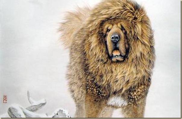 Le peintre chinois Lin Yue et sa muse : le mastiff tibétain Peintu10