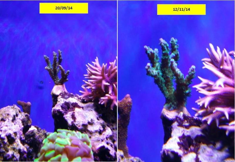 bac de 230L Blau gran cubic 92 - Page 2 Captur19