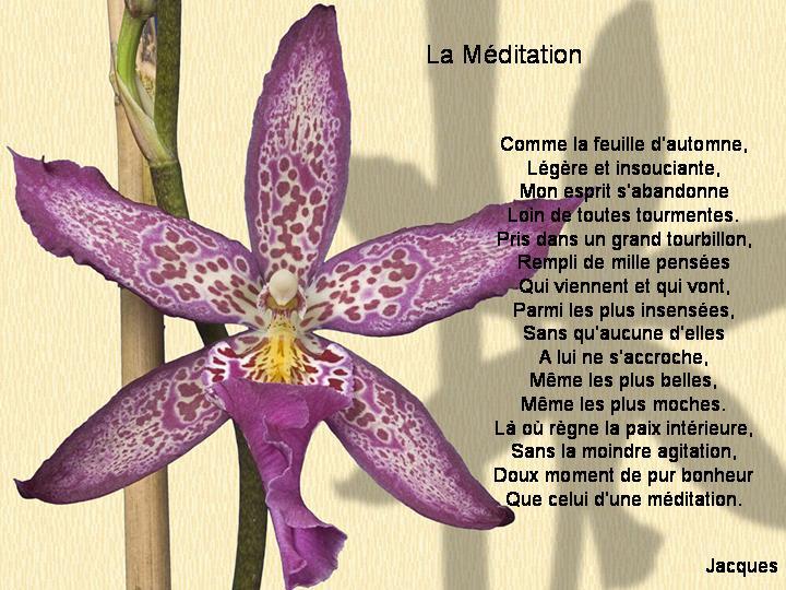 La méditation : savez-vous méditer ? aimez-vous méditer ?  La_myd10