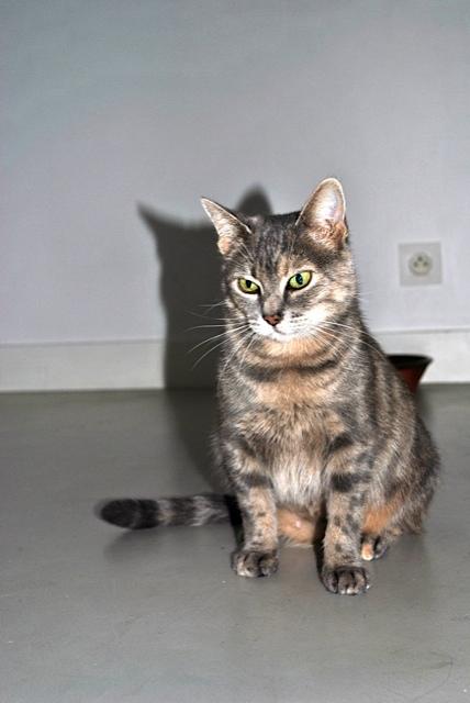 Grisette, femelle tigrée grise et fauve, née le 1er janvier 2011 - Page 2 _dsc0012