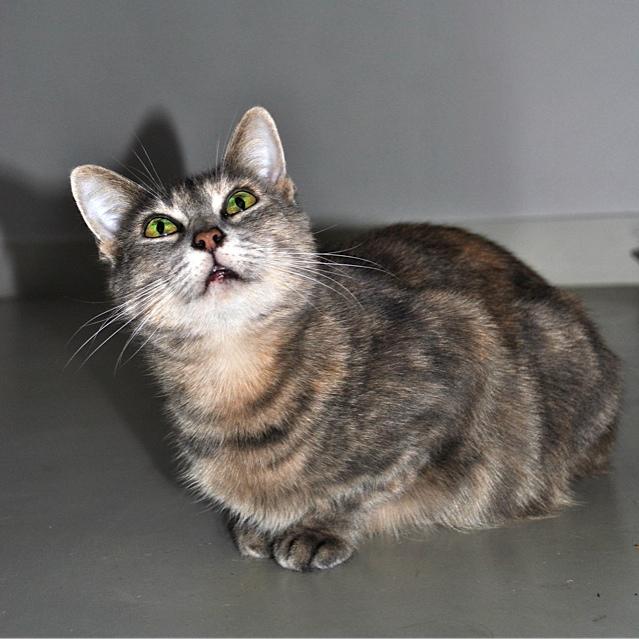 Grisette, femelle tigrée grise et fauve, née le 1er janvier 2011 - Page 2 _dsc0013