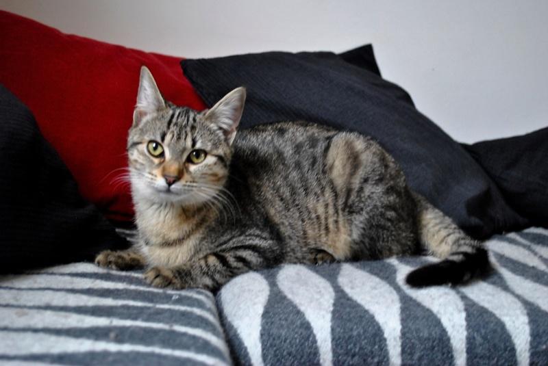 Janet, femelle type européenne tigrée, née le 15 juin 2014 - Page 4 _dsc0032