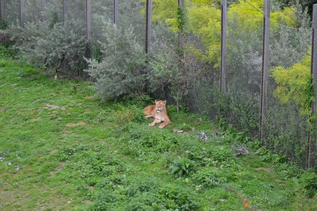 Disney's Animal Kingdom, un parc animalier comme les autres? Dsc_1111