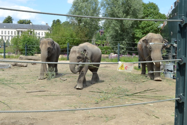Disney's Animal Kingdom, un parc animalier comme les autres? Dsc_1112