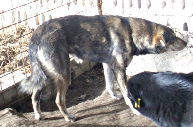 HOOK, mâle croisé, taille moyenne né 2012 (Pascani) - REMEMBER ME LAND 10665110
