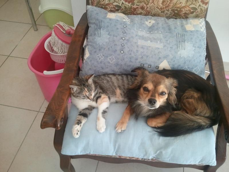 Me voilà avec trois chien ,Diamant ,Enja , Shadow. 2012-010