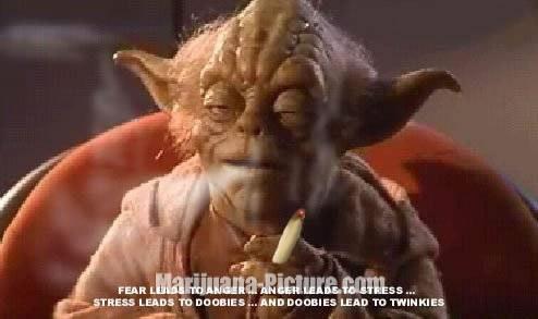 Hemp medecines Yoda_o10