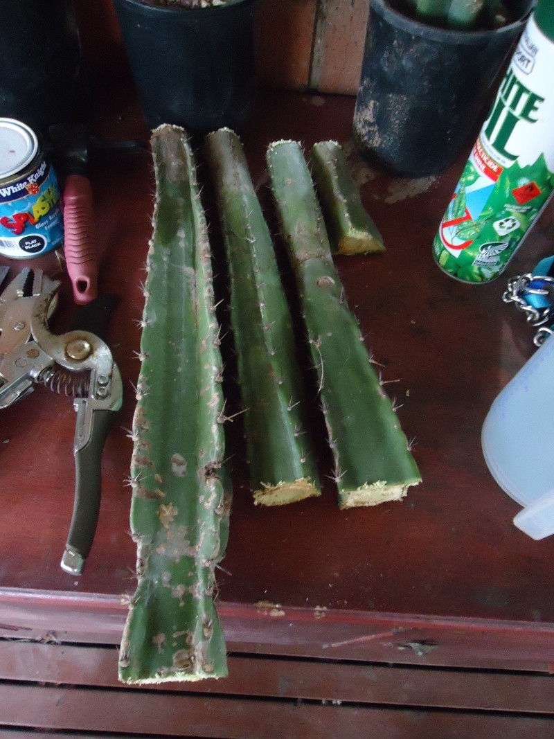 Cacti ID required  Dsc02013