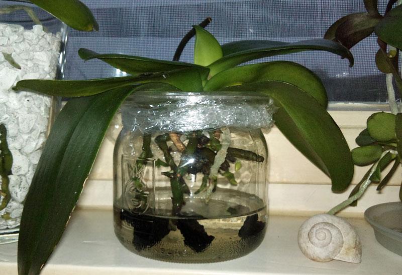 Orchidee in Glasvase - Seite 7 Dsc00010