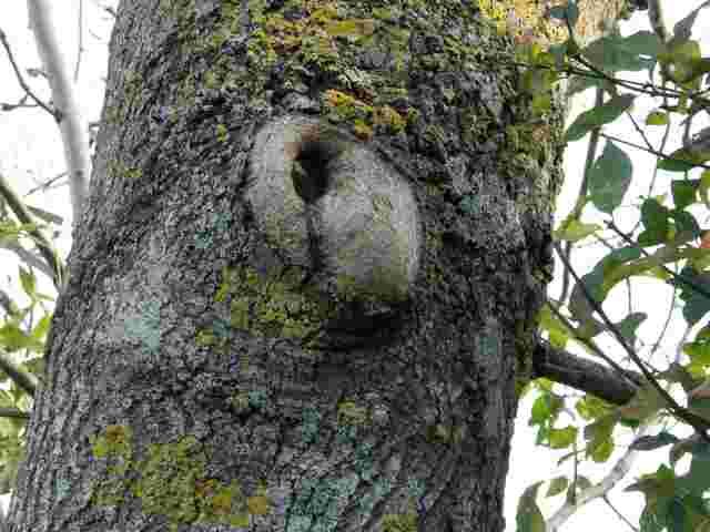 43 - les troncs d'arbres....  Photos reçues - Page 2 Dscn6824