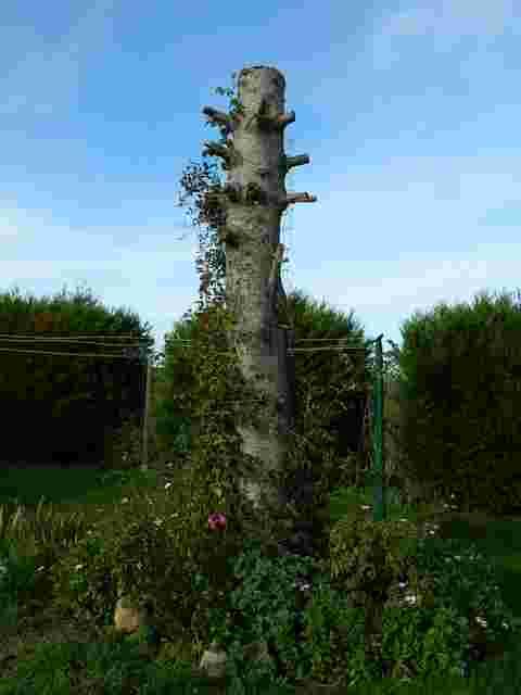 43 - les troncs d'arbres....  Photos reçues - Page 2 Dscn6825