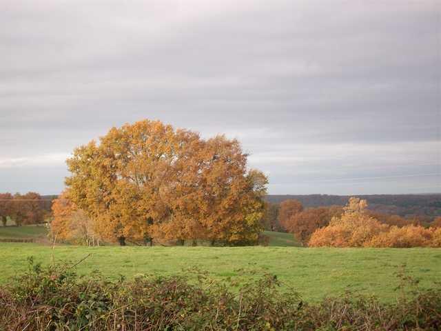couleurs d'automne - Page 3 Imgp0035