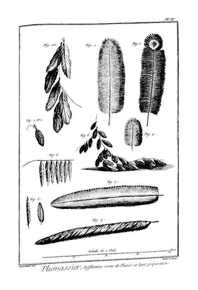 Les plumassiers, ces artisans indispensables aux modes du XVIIIème siècle Plumas12