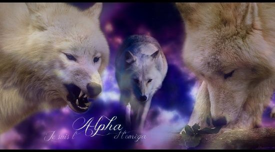 ~Libre Service de Kaala~ Alpha-10