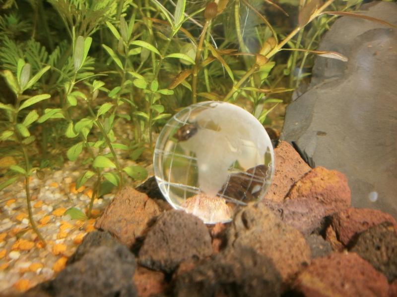 Premier aqua 84 L  Pb230210
