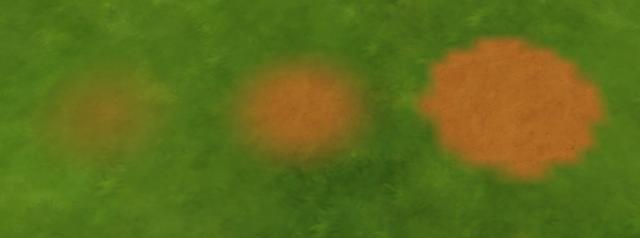 [Débutant] Les peintures de terrain 22-11-10