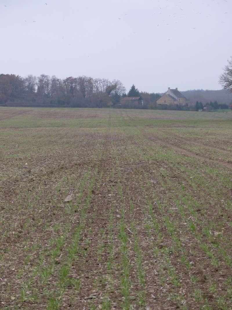 sauver un blé mal barré... 15810
