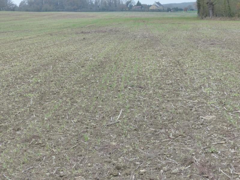 sauver un blé mal barré... 16310