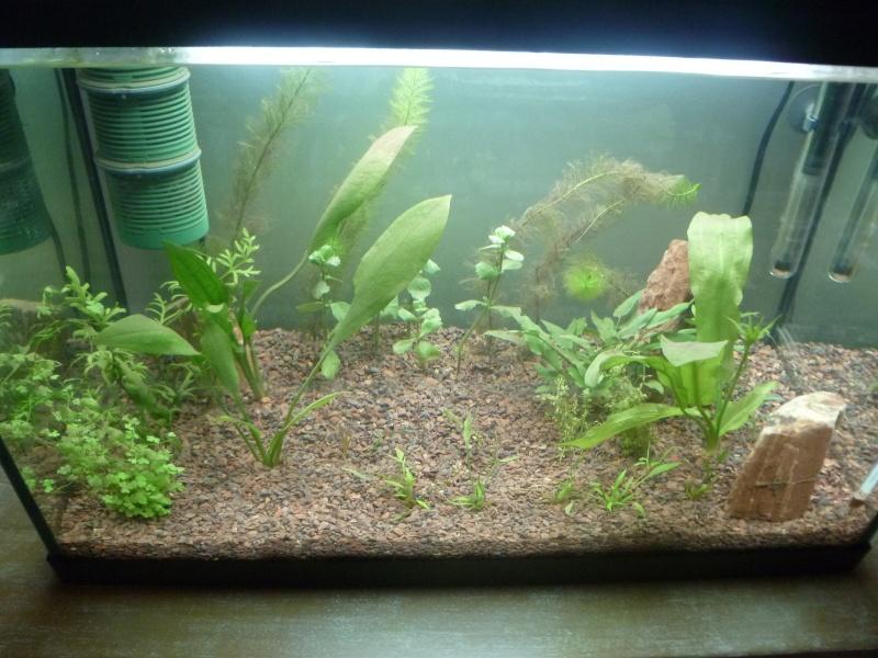 plantes noircissent P315