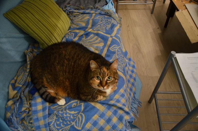 Marlone, femelle type européen tricolore, née en 2004 (frais d'adoption libres) Dsc_1710