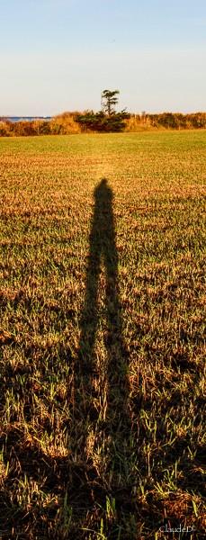 Je ne suis que l'ombre de moi-même !! - Page 2 Ombre310