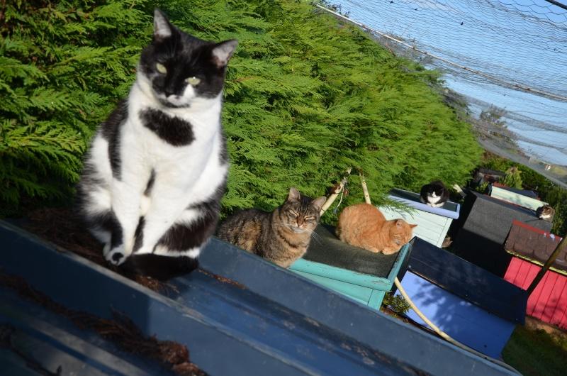La face cachée de l'Ecole du chat de Quiberon - Page 7 Dsc_9720