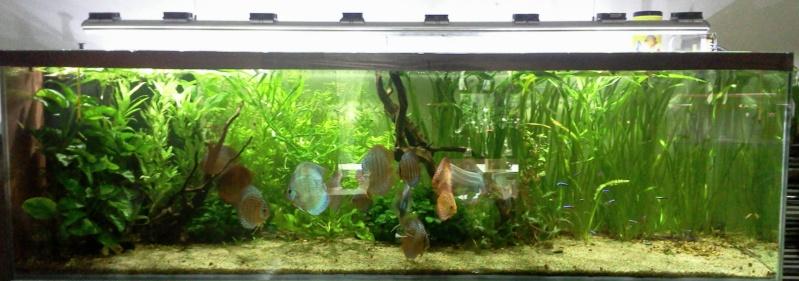 Ma 1ére passion en aquariophilie. Lampe_10
