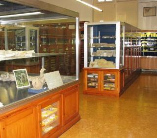 NOVA sortida dissabte 13-12-14 Museu Geològic del Seminari de Barcelona (MGSB) Sala10