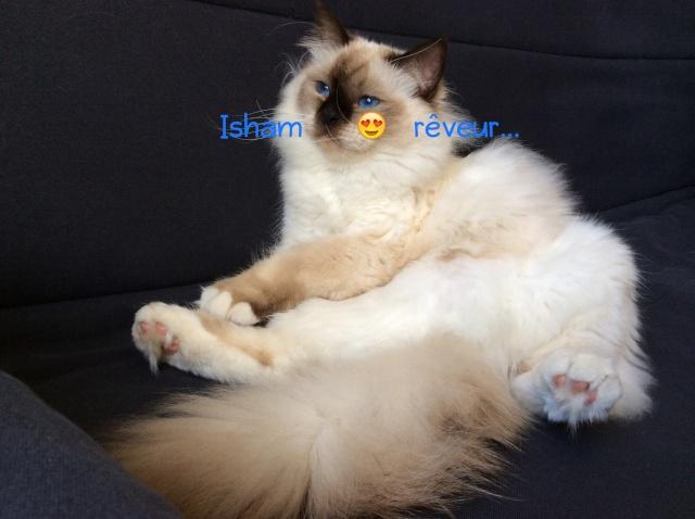 Isham, le sacré adoré :D - Page 2 Image11
