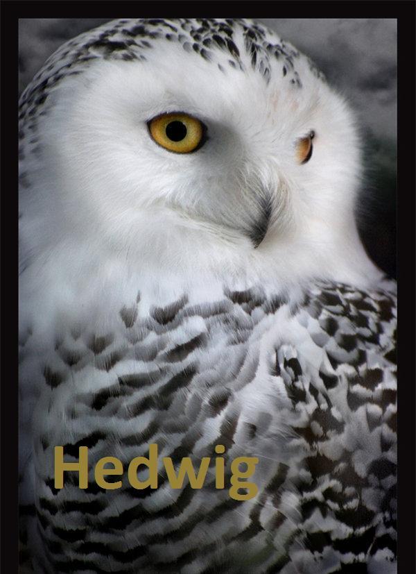 Das Team Hedwig10