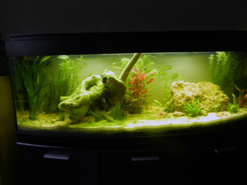 Mon aquarium de A à Z... C'est fini :( - Page 5 Dscn3310