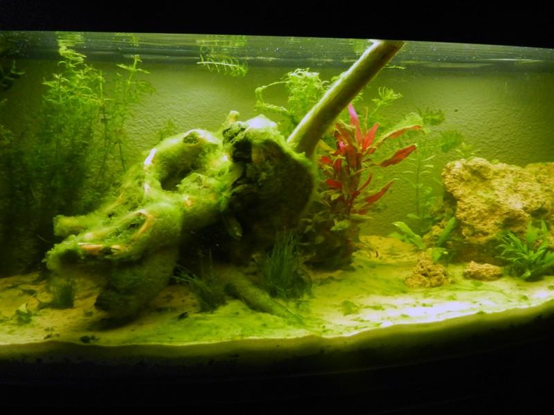 Mon aquarium de A à Z... C'est fini :( - Page 5 Dscn3311