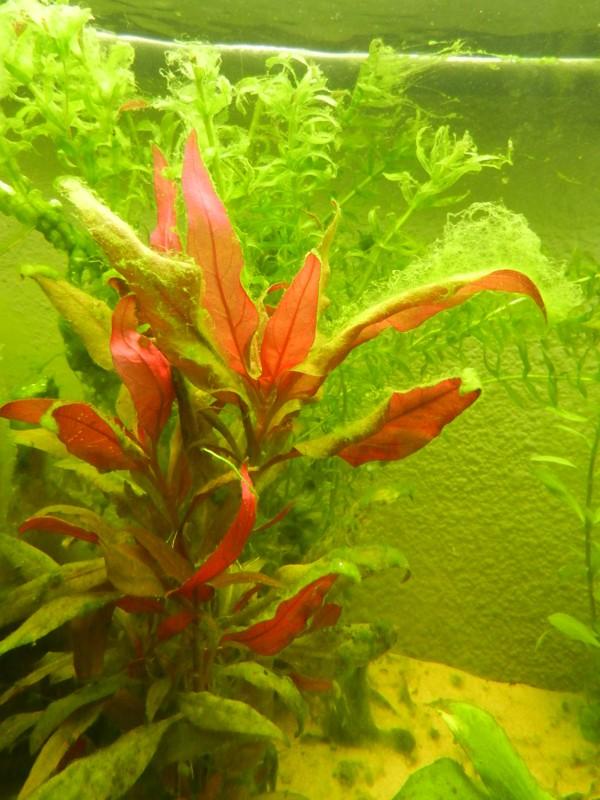 Mon aquarium de A à Z... C'est fini :( - Page 5 Dscn3313