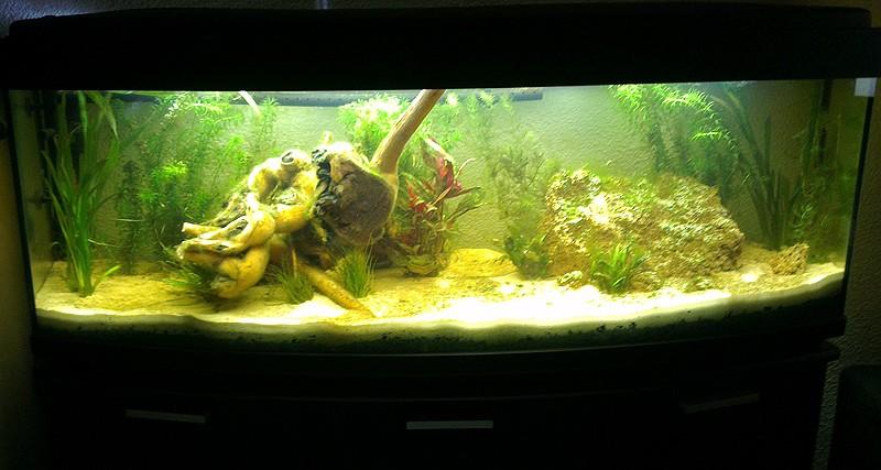 Mon aquarium de A à Z... C'est fini :( - Page 4 Imag2210