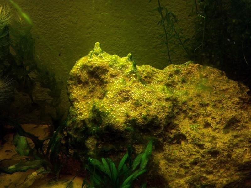 Mon aquarium de A à Z... C'est fini :( - Page 5 Img_2011