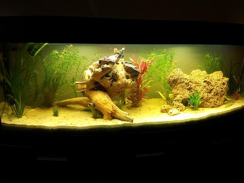 Mon aquarium de A à Z... C'est fini :( - Page 5 Img_2012