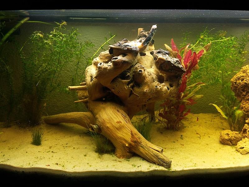 Mon aquarium de A à Z... C'est fini :( - Page 5 Img_2014