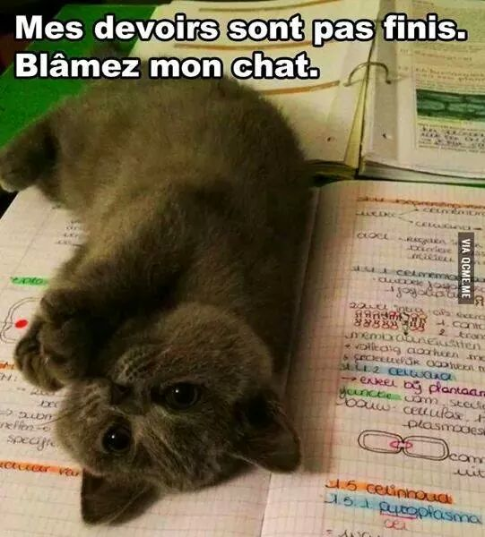 Images du jour sur les chats - Page 2 Img_1210