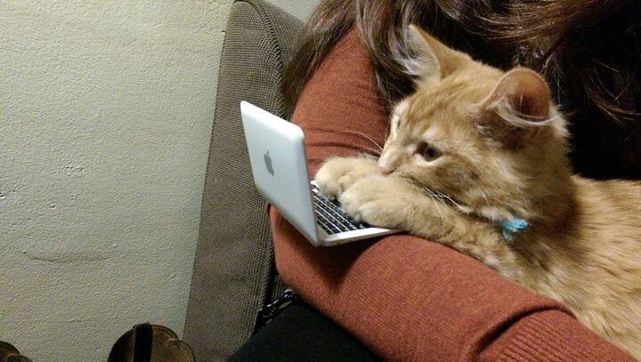 Images du jour sur les chats - Page 2 Img_3010