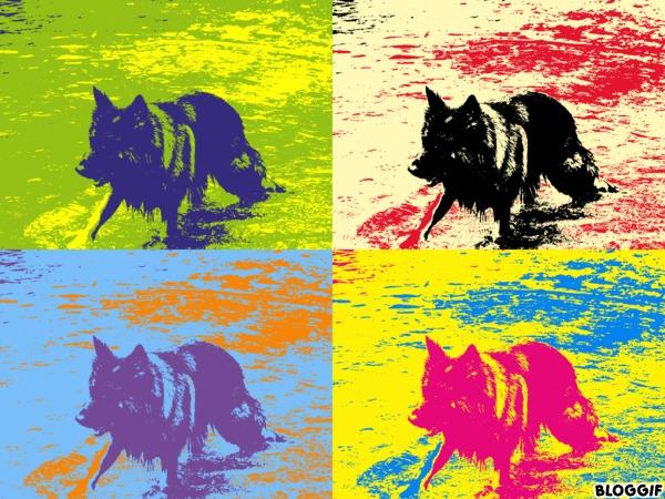 Les chiens en Iran  8adabb10