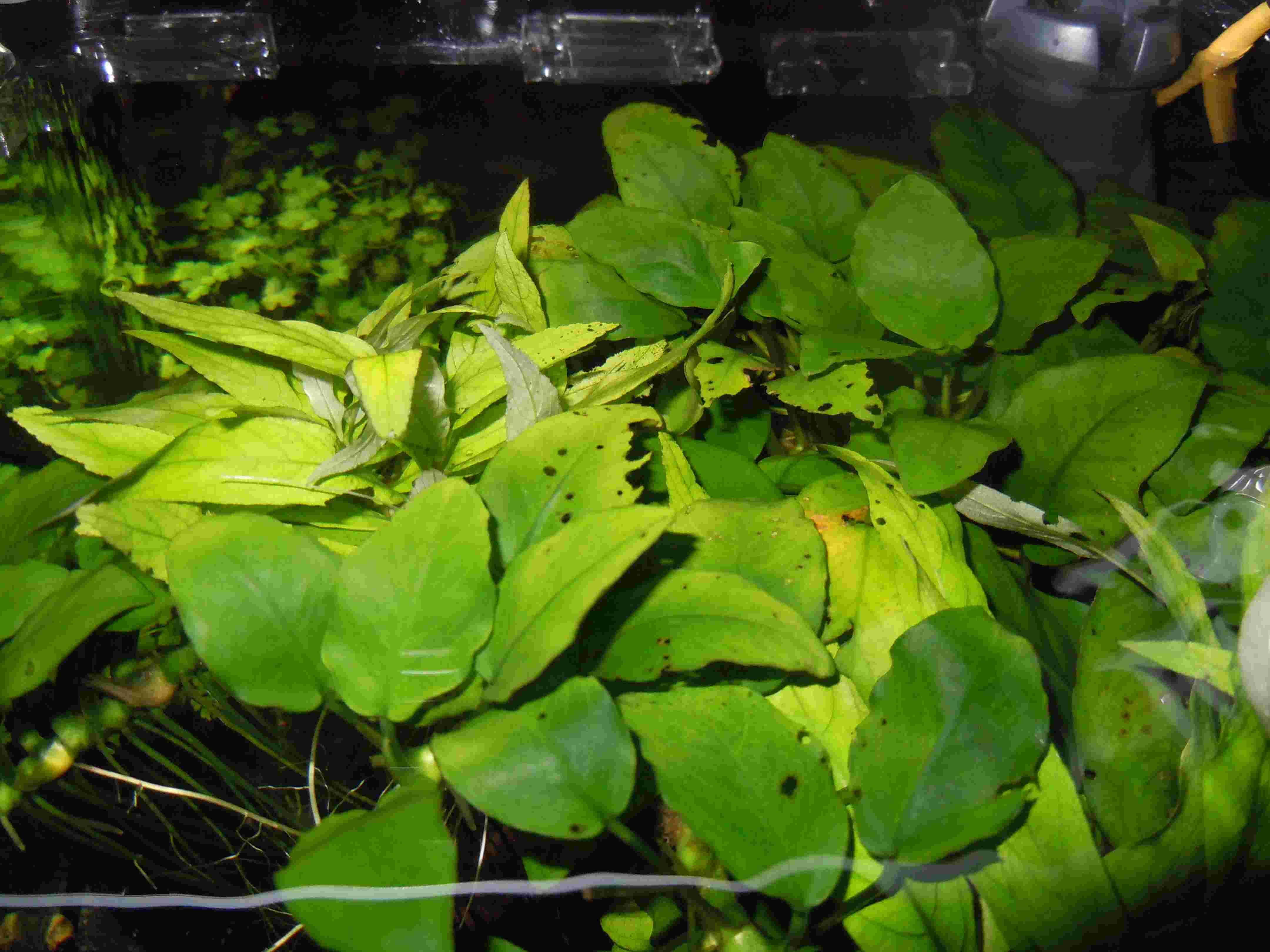 Plantes trouées et rongées Dscn6410