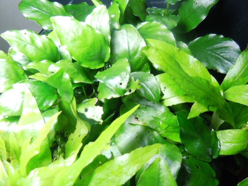 Plantes trouées et rongées Dscn6412