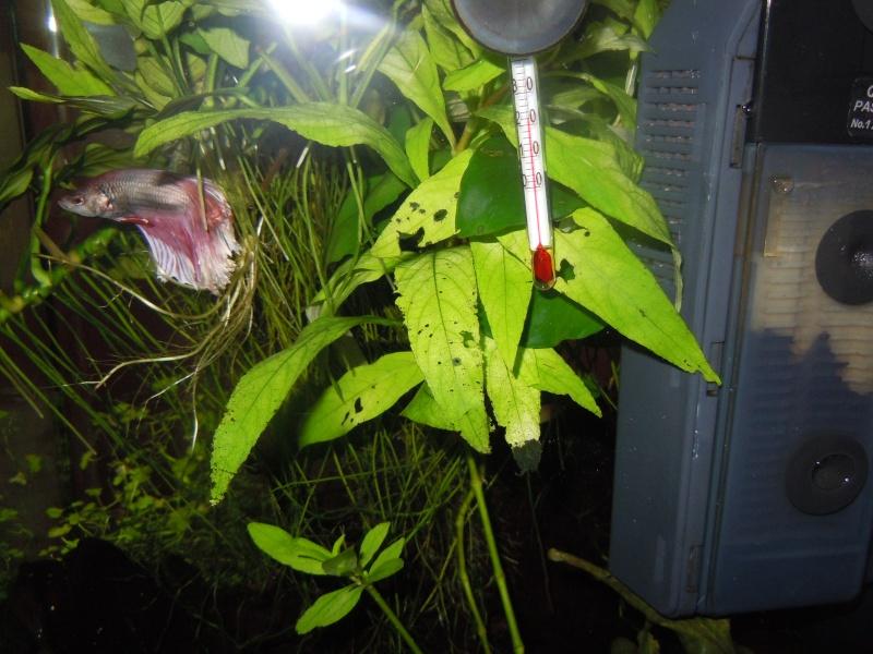 Plantes trouées et rongées Dscn6414