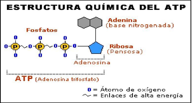 Bioenergia y sistemas energeticos Dibujo10